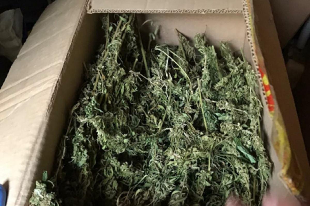 Полный багажник конопли сколько времени держаться марихуана в организме человека